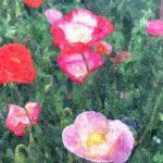 身近な花 アイスランドポピー
