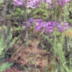 身近な花 アガパンサス