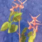 身近な花 イカリソウ